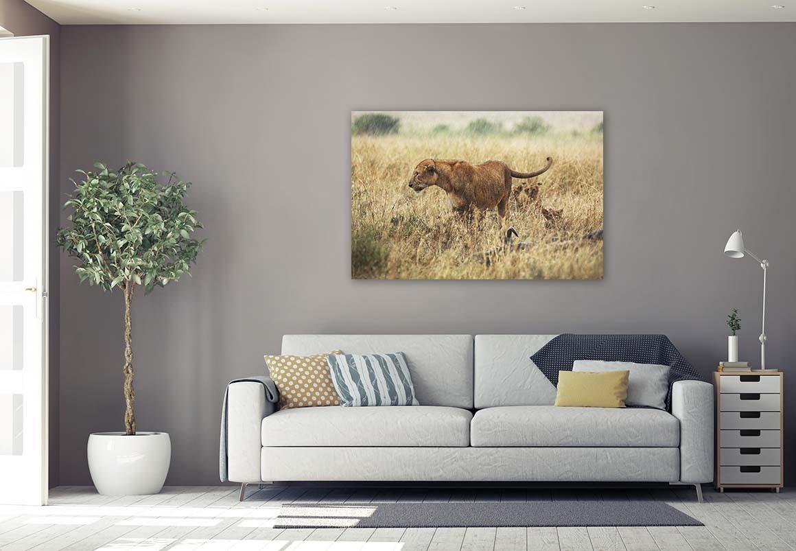 Leona del Serengueti 80x120
