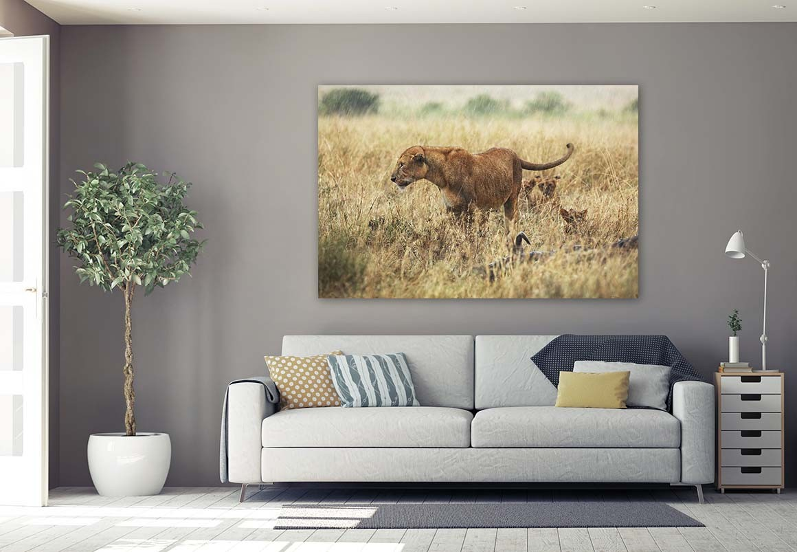 Leona del Serengueti 100x150