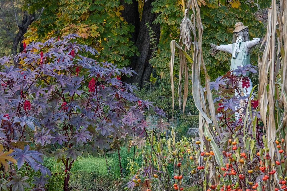 El espantapájaros del  Jardín Botánico