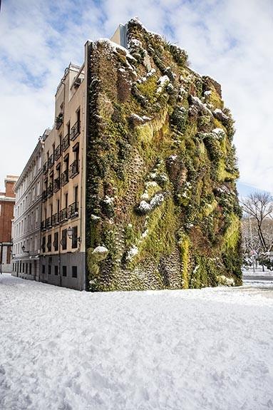Jardín Vertical con nieve