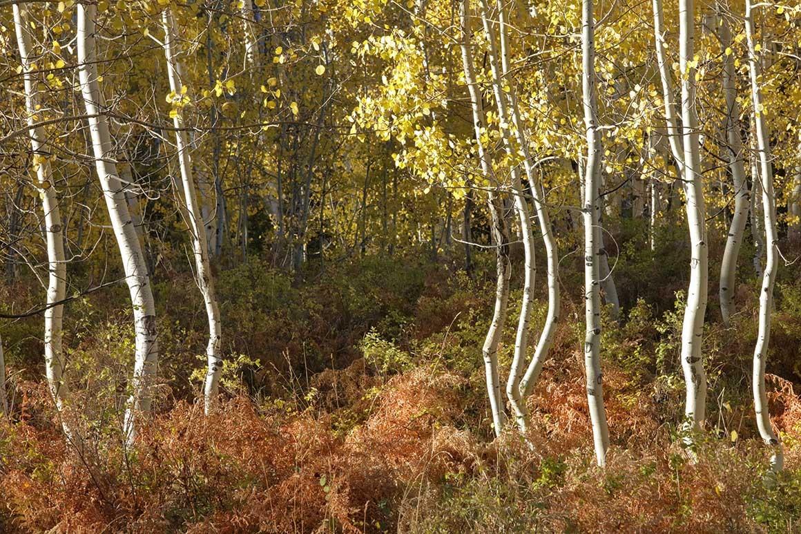"""Fotografía artística """"El baile de los árboles"""""""