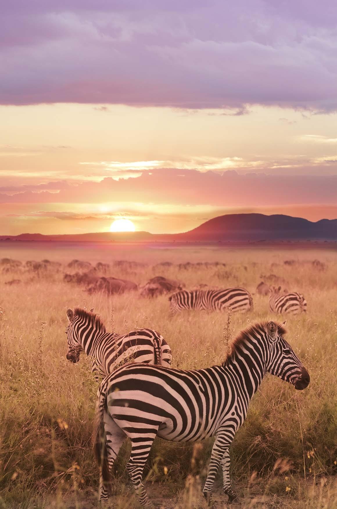 Astro Rey del Serengueti