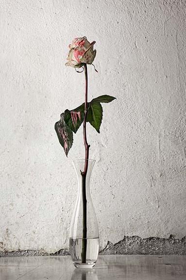 Frágil y Rosa