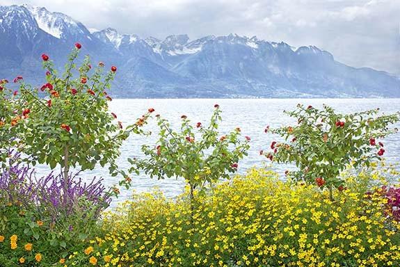 Flores del Lago