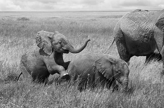 Juegos de Elefantes